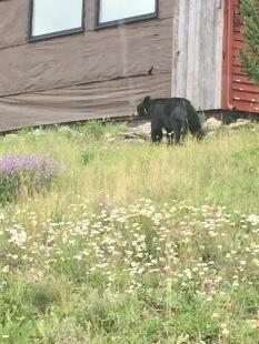 2015 08 05 - Bear