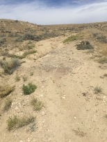 2015 08 14 2015 08 14 McCullough Peaks Heard Management area 5